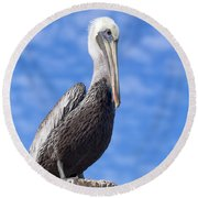 Florida Brown Pelican Round Beach Towel