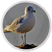 Florida Gull Round Beach Towel