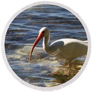 Florida Ibis Round Beach Towel