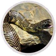 Florida King Snake Lampropeltis Getula Floridana Usa Round Beach Towel