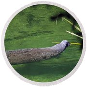 Florida Manatee  Round Beach Towel