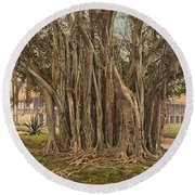 Florida Rubber Tree, C1900 Round Beach Towel
