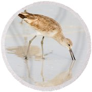 Florida Shorebirds - Willets In Their Summer Finery Round Beach Towel