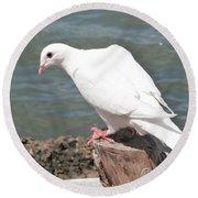 Florida White Pigeon Round Beach Towel
