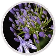 Flower- Agapanthus-blue-buds-one-flower Round Beach Towel