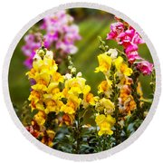 Flower - Antirrhinum - Grace Round Beach Towel by Mike Savad