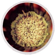 Flower Beauty Iv Round Beach Towel by Marco Oliveira