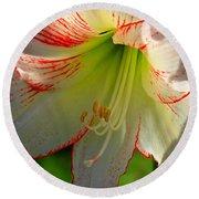 Flower Child Amaryllis Flower Art Round Beach Towel