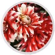 Flower-dahlia-red-white-trio Round Beach Towel
