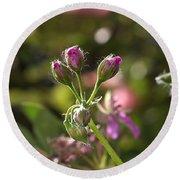 Flower-geranium Buds Round Beach Towel