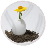 Flower Growing In A Egg Round Beach Towel