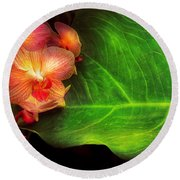 Flower - Orchid - Phalaenopsis Orchids At Rest Round Beach Towel