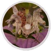 Flower Spider On Horsemint #2 Round Beach Towel