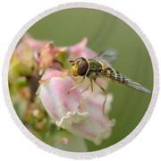 Flowerfly On Blueberry Blossom Round Beach Towel