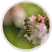 Flowerfly Pollinating Blueberry Buds Round Beach Towel