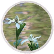 Flowering Pond Plant Round Beach Towel
