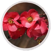 Flowering Quince With Bee Round Beach Towel
