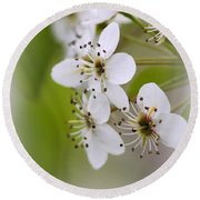 Flowers - Blossoms Round Beach Towel