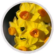 flowers-Jonquils-bright yellow Round Beach Towel