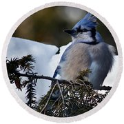 Fluffy Blue Jay Round Beach Towel