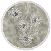 Fluffy Dandelions  Round Beach Towel