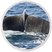 Flukes Of A Sperm Whale Round Beach Towel
