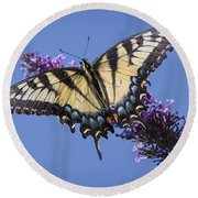 Fluted Swallowtail Round Beach Towel