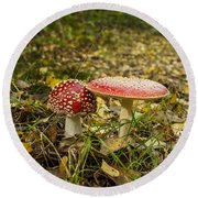 Fly Amanita Round Beach Towel