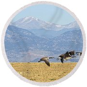 Flying Canadian Geese Rocky Mountains Panorama 2 Round Beach Towel