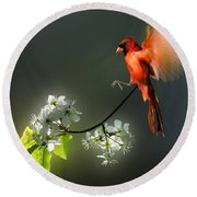 Flying Cardinal Landing On Branch Round Beach Towel