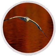 Flying Gull On Fall Color Round Beach Towel