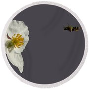 Flying In For Breakfast Round Beach Towel