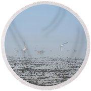 Foggy Seabirds Parksville Beach Round Beach Towel