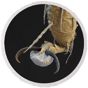 Foot Of A Bat Tick Sem Round Beach Towel