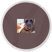 For The Love Of Dogs Round Beach Towel