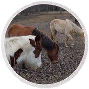 Foraging Horses Round Beach Towel