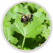 Forest Bee 7260 Round Beach Towel