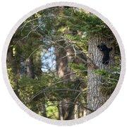 Forest Black Bear Cub Round Beach Towel