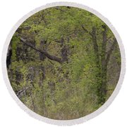 Forest Glimpse Round Beach Towel