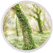 Forest Glow - The Magical Trees Of The Los Osos Oak Reserve Round Beach Towel