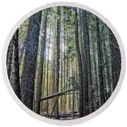 Forest Morning Round Beach Towel