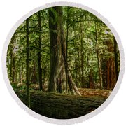 Forest Of Cathedral Grove Collection 1 Round Beach Towel