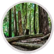 Forest Of Cathedral Grove Collection 2 Round Beach Towel
