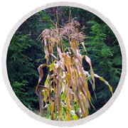 Forgotten Corn Stalks Round Beach Towel