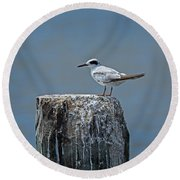 Forster's Tern Round Beach Towel
