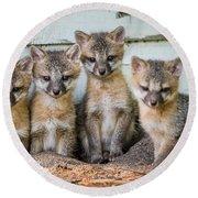 Four Fox Kits Round Beach Towel