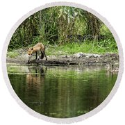 Fox At Water Hole Round Beach Towel