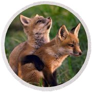 Fox Cub Buddies Round Beach Towel by William Jobes