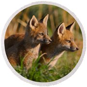 Fox Cubs At Sunrise Round Beach Towel
