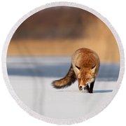 Fox On Ice Round Beach Towel